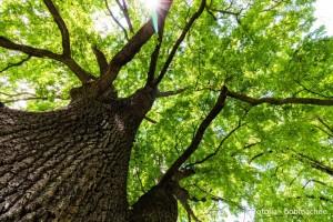 Tag des Baumes verkl